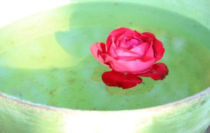 photo-pixabay-waterbowl